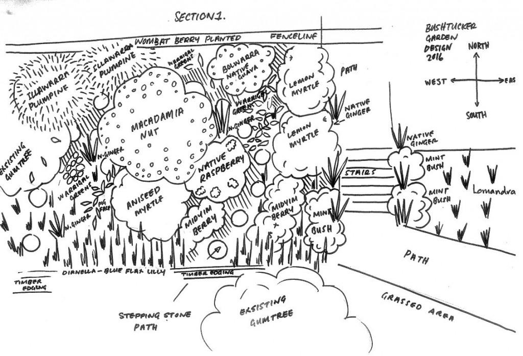 bush-tucker-garden-plan